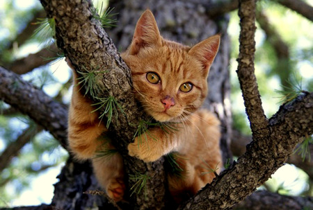 Hanging Out - gripping, tree, leaves, orange tabby, cat, branch