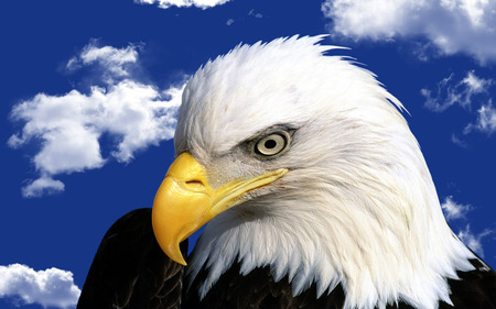 Eagle - eagle, eyes, clouds, blue