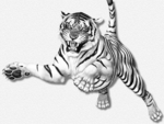 White Tiger Leaping