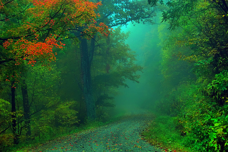 Foggy fall road - autumn, foggy, road, fog