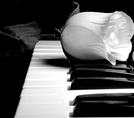 rose and piano - piano, white, music, rose
