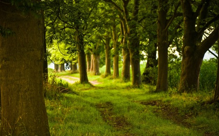 Path In The Forest - grass, road, peaceful, path, trees, nature, wallpaper, woods, beauty, forest, beautiful, green