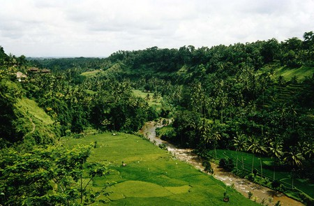 Bali-View-from-a-Restaurant-near-Ubud-on-tropical - green, ubud, nature, indonesian, bali, sky