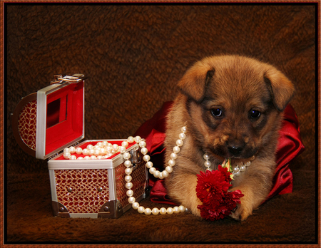 puppy - little, necklace, box, beautiful, baby, sweet, photography, pearl, nice, cool, flowers, puppy, dog