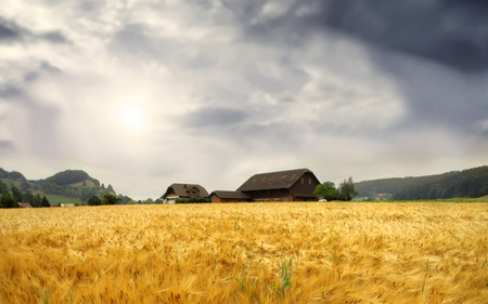 Wheat Field - hills, peaceful, sky, colors, wheat, trees, nature, architecture, beauty, houses, beautiful, clouds, field, house
