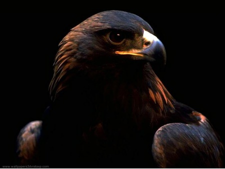 Eagle Birds Animals Background Wallpapers On Desktop