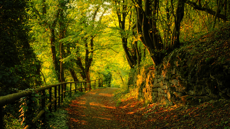 Autumn Road - woods, trees, fall, autumn