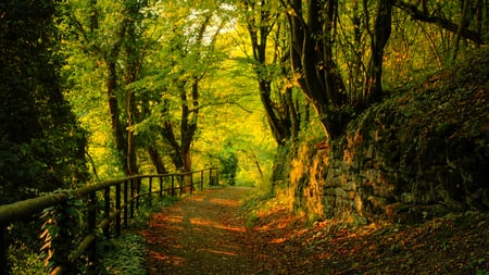 Autumn Road - autumn, fall, trees, woods