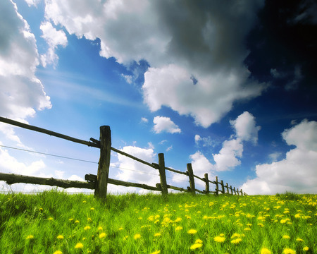 Spring Time - pretty, photography, flowers, sunny, nature, spring, sky