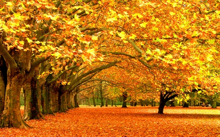 Autumn - beauty, lovely, yellow, golden autumn, park, forest, golden, landscape, beautiful, september, trees, falling leaves, nature, amazing, peaceful, path, autumn colors, leafs, autumn, orange, grass, view, colors, leaves, alley, splendor, carpet