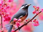 Birds_Birdie_on_a_branch