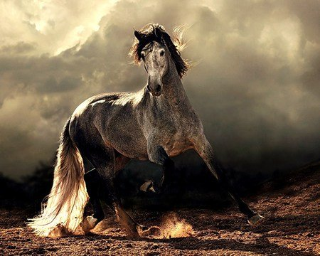 Wild Beauty Free As The Horses Wallpapers And Images