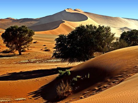 SUN SHADE OVER DESERT - desert, alone, hot, sunny, desert beauty, trees