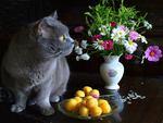 cat & still life 3