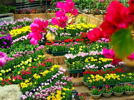 Gorgeous Flower Garden Colorful