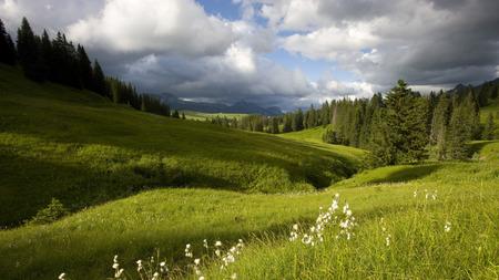 WONDERFUL WORLD - world, flowers, grass, sky, wonderful, stream, trees, field, green