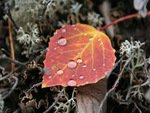 Colorful Leaf in the Moss