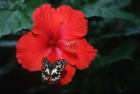Butterfly - flower, leaves, butterfly, animal