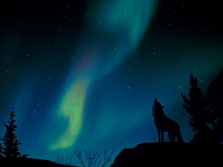 Song of the north - stars, northern lights, blue and green, wolf howling, cliff, trees