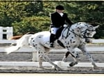 His Mir Image Dressage
