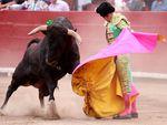 Bull Vs Matador