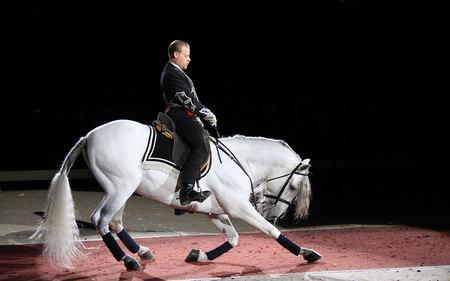 Lippizan Performance - horses, white, austria, lippizan, vienna, dressage, lippizaner
