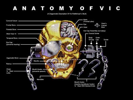 Anatomie Von Vic
