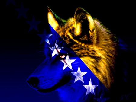Bosnian Wolf - blue, wolf, bosnia, star, yelow