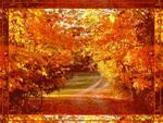 Memories of fall  3240 x 2521