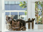 small cats on window
