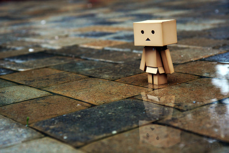 Danbo In The Street - danbo, street, rain, box