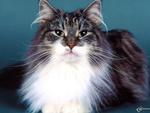 chubby needs a home  meow meow