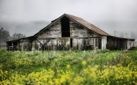 Abandoned Farm - beauty, abandoned, flowers, grass, landscape, colors, misty, sky, fog, beautiful, field, farm, architecture, trees