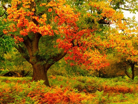 Autumn Colors - autumn, colorful, grass, splendor, colors, autumn leaves, tree, trees, fall, nature, beauty, beautiful, lovely, green, leaves, autumn colors