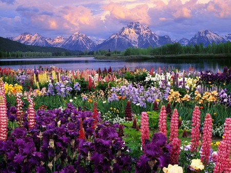 Colorful Landscape   Mountain, Colorful, Photography, Colored, Flowers,  Nature, Lake
