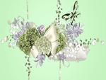 Hydrangea Beauty