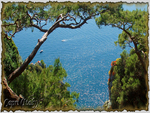 Nature in island of Capri (Italy)