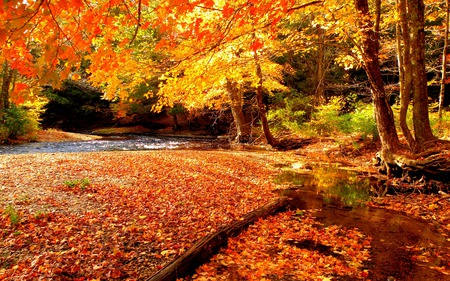 Autumn - grass, peaceful, creek, forest, landscape, autumn, colors, water, nature, trees, fall, woods, beauty, beautiful, lovely, wood, river, autumn colors, leaves
