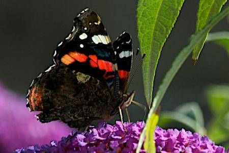 Butterfly - flowers, leaves, butterfly, animal