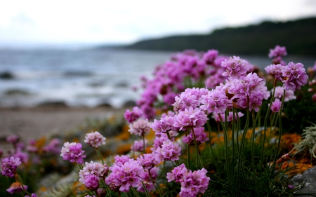PINK BEACH - beach, flowers, blossoms, blooms, pink