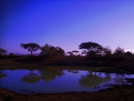 AFRICA NIGHT LIFE