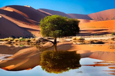 Oasis Tree Deserts Nature Background Wallpapers On Desktop Nexus