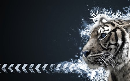 White Tiger Vector Cats Animals Background Wallpapers On Desktop