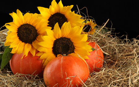 Sunflowers and fruits - yellow, fruit, hay, sunflower, nature, flower