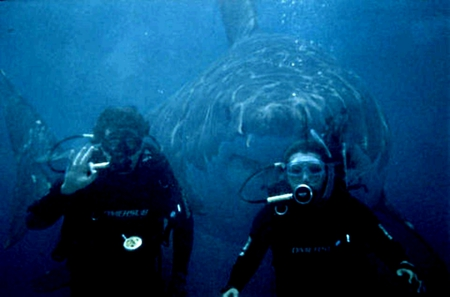 great white behind them - shark, lookout, dive, great white, guy, girl