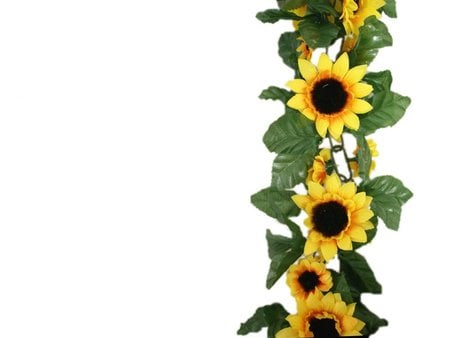 Sunflower border wallpaper - border, flower, nature, sunflower, white