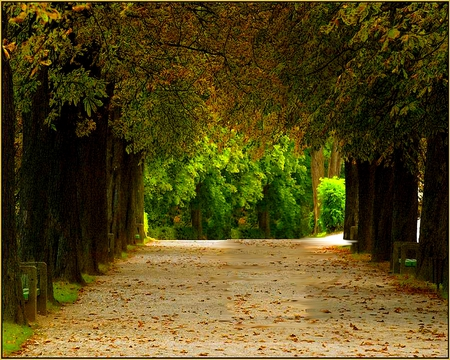 PEACEFUL PATHWAY - forest, fall, roof, clean, trees, shelter, sand, green, pathway, peaceful, rows, white