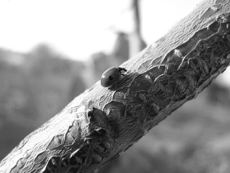 branch - autumn, tree, black and white, black, beauty
