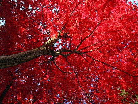 Red Canopy - Other & Nature Background Wallpapers on Desktop Nexus ...