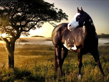 horse - Horses Wallpaper ID 508862